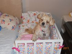 Co-sleeper crib that I made for my dog so she can sleep right beside me. I even made the bumper pads.