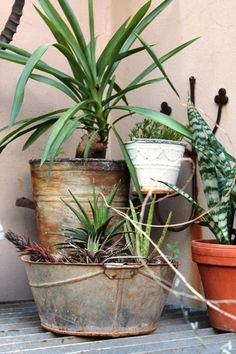 Love the metal planters. Metal Planters, Planter Pots, The Great Outdoors, Bro, Greenery, Succulents, Living Room, Plants, Succulent Plants
