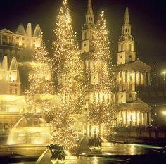 Previous pinner wrote : Trafalgar Square Christmas Lights, London, England