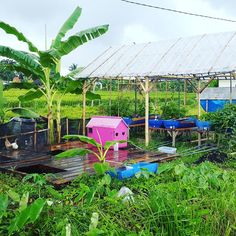 A view on a photo from back in the day... We have grown and developed so much from this stage come check it out at the farm@ #goodearthfarm #goodlife #farmprogress #farmlife #smallfarm #farming #permaculture #gardendesign #aquaponics #permaculturefarm #smallfarmers #balifarm #bali #ubud