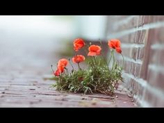 Abraham Hicks - The story of YOU, powerful creator you - powerful segment (NEW) - YouTube