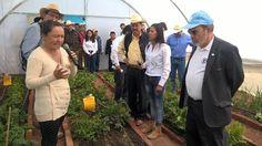 Israel Tentory, titular de la dependencia, informó que se destinarán 40 millones 530 mil pesos para apoyar a más de 10 mil familias del sector rural a fin de que ...
