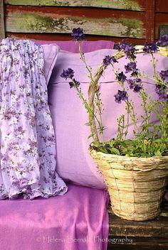 pretty shades of lavender \ lilac Lavender Cottage, Lavender Blue, French Lavender, Lavander, Lavender Fields, Rose Fushia, Purple Flowers, Beautiful Flowers, Purple Rain