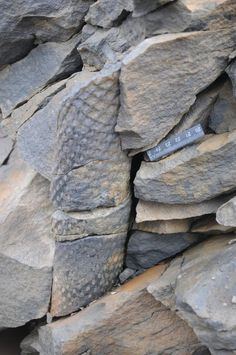 In Photos: Fossil Forest Unearthed in the Arctic