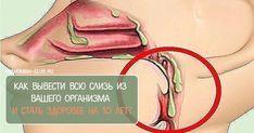 Скопление слизи в организме — причина многих болезней и воспалительных процессов |