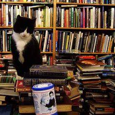 Voltaire & Rousseau Bookshop Cat