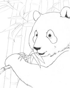 panda coloring zoo animals coloring