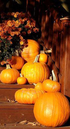 Autumn Splendor....front porch pumpkins....  #ADKAutumn