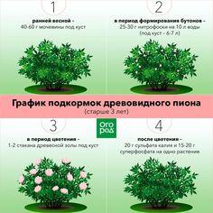 Plants, Landscape
