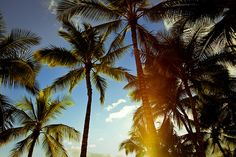 Palm trees...dreaming of summer