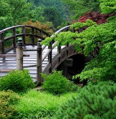 I think a Japanese bridge is so beautiful in a garden.