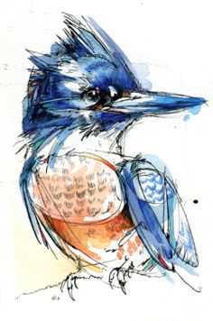 Belted Kingfisher, Female, A small painting from back in May. India ink, watercolor, Tombow markers.