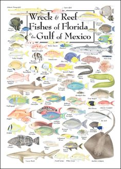 For my trip to DRC in august.omgg so cool Wreck and Reef Fishes of Florida and the Gulf of Mexico (Cool Places In Florida) Fish Chart, Places In Florida, Florida Keys, Fauna Marina, Water Poster, Gone Fishing, Fishing Tips, Sport Fishing, Kunst Poster