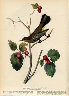 Old 1937 Antique Vintage Book JOHN JAMES AUDUBON Birds of America Bookplate based on Water-color Painting Plate Townsend Solitaire 460