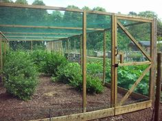 A fruit cage at Hidcote