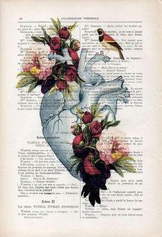 Peonía de corazón anatomía botánica vintage dibujo por NotMuchToSay
