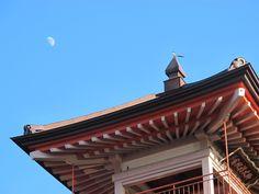 【境内の鳥】時報堂のてっぺんで鳴くオナガです。屋根のしたではスズメが遊んでいます。