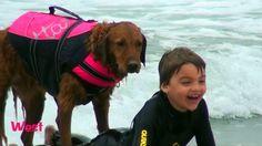 Σκύλος διδάσκει παιδιά και ενήλικες με ειδικές ανάγκες να κάνουν σέρφινγκ και πως να απολαμβάνουν τη ζωή!