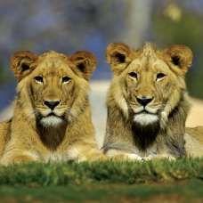 San Diego Zoo Safari Park - included attraction on the Go San Diego Card!