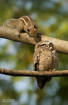 photo by Sandeep Somasekharan ... looks like the owl and the squirrel ... Where is the pussy cat?