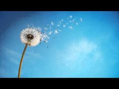 PERSONAS ALTAMENTE SENSIBLES (PAS) - YouTube