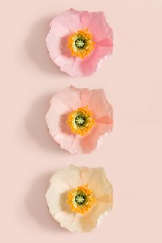 Paper Icelandic Poppy | Wall Flower