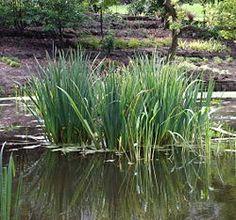 Vesi on usein tärkeä osa puutarhaa.