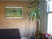 Geef je huis of kantoor een warme uitstraling met prachtig decoratief stucwerk.