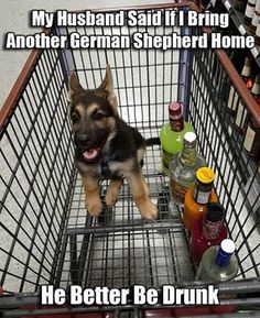 The German Shepherd!  This is what you need to do to get you a little furry baby... Hahaha...