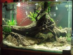 Under the Willow par Madawc - another aquatic set up I'd love to see as a terrarium!