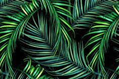 tropical pattern - Recherche Google