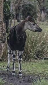 Resultado de imagem para vida selvagem animais