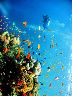 Wonderful diving in Sipadan - island of Sabah - Malaysia