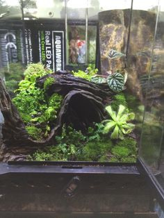 Terrariums, Terrarium Reptile, Reptile Cage, Reptile Enclosure, Reptile Tanks, Guinea Pig Toys, Guinea Pig Care, Les Reptiles, Amphibians