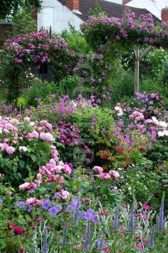 Purple and pink cottage garden Back Gardens, Small Gardens, Outdoor Gardens, Cottage Garden Design, Cottage Garden Plants, French Cottage Garden, Cozy Cottage, Beautiful Gardens, Beautiful Flowers