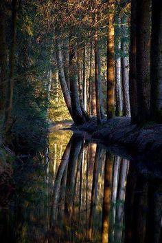 Csónakázó erdő