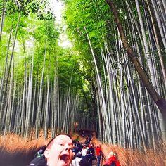 Bamboo path #japan #kyoto #wifirental #japantravel #pupuru