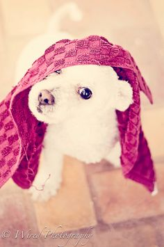 Oh hi, I'm super cute puppy with a towel on my head :)