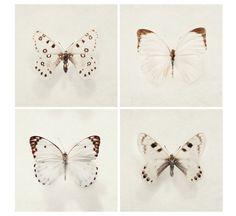 Satz von vier Butterfly-Drucke. Ursprüngliche Naturfotografie von Irene Suchocki.    Sammlung Titel: Wings  Druckgröße: Wählen Sie aus der