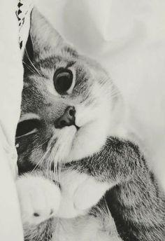 Cutest kitty face ever! awww