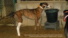 Petición · Daryl Cowles, Mitchell Carmichael: Stop Subsidizing Greyhound Racing in West Virginia · Change.org