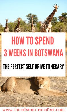 Wondering how to spend 3 weeks in Botswana? Here is the perfect Botswana itinera… Wondering how to spend 3 weeks in Botswana? Here is the perfect Botswana itinerary to guide you. Africa Destinations, Travel Destinations, Holiday Destinations, Chobe National Park, National Parks, Safari, Travel Advice, Travel Ideas, Travel Guide