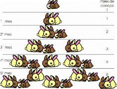 El numero de conejos coincide con cada uno de los términos de la sucesión de Fibonacci.