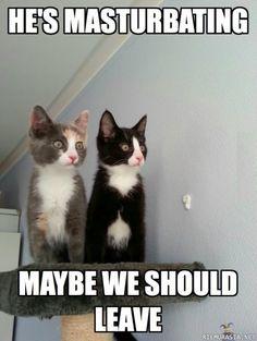 Kuva: Kissat - Normi tilanne, Hakusanat: Kissa kissat masturboi