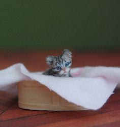 OOAK Realistic Dollhouse Miniature 1:12 .•:*¨ Kittten ¨*:•.Handmade Sculpture
