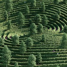 Austria-based studio Precht has designed a maze-like park divided by high hedges that would allow people to be outdoors while maintaining social distance during the coronavirus pandemic. Chris Precht, founder of Landscape Architecture, Landscape Design, Concept Architecture, Urban Landscape, Japanese Rock Garden, Austria, Distance, Mug Design, Inspiration Design