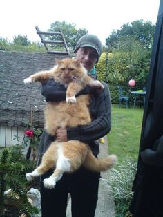 Now that's a big kitty!