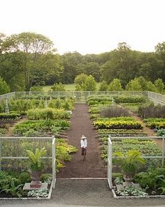 M.S vegetable garden