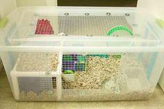 Farei a gaiola da Marceline, a partir de uma caixa organizadora. Essa eu peguei como exemplo.