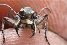 Image result for beetle mouthparts